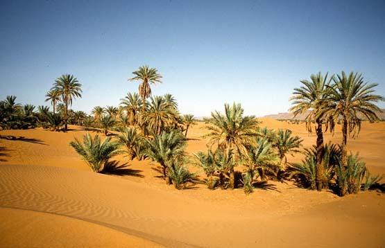 egypt-pur-reisen-oase